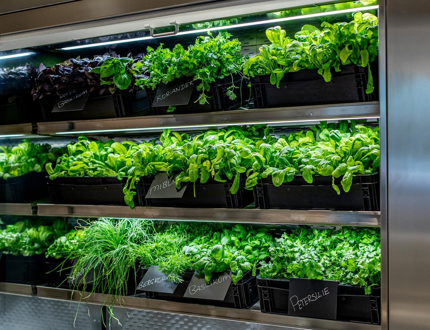 Herb wall in the CANTEEN